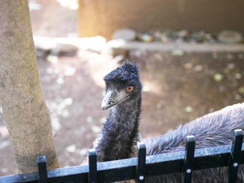 オレンジの目の鳥