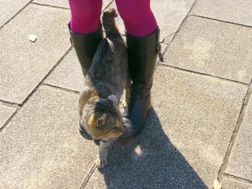 足元にくるネコ