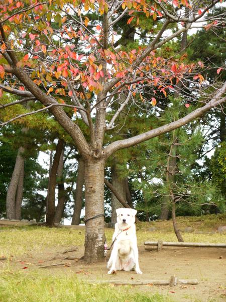 桜の木の下で2