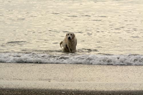 海から犬が