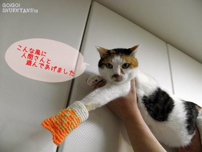 遊んであげるのも猫の仕事