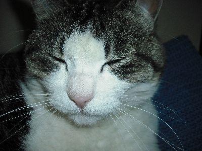 白川さん猫 011縮小