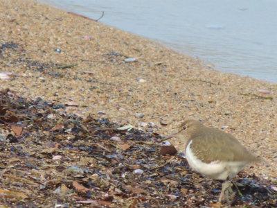 宍道湖の鳥2