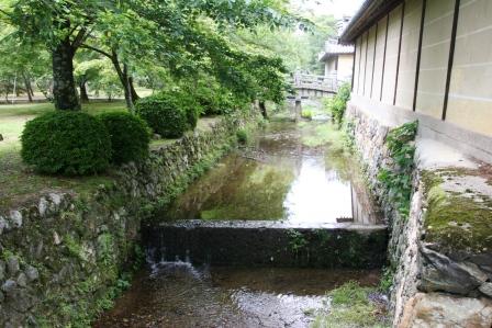 御殿川・大沢池側より  H19.6.11撮影