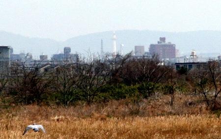 嵐山から京都タワーは見えるのか_H25.03.16撮影