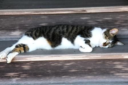 御室の猫_H25.10.12撮影