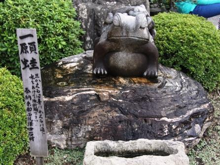 一願蛙_H25.10.13撮影