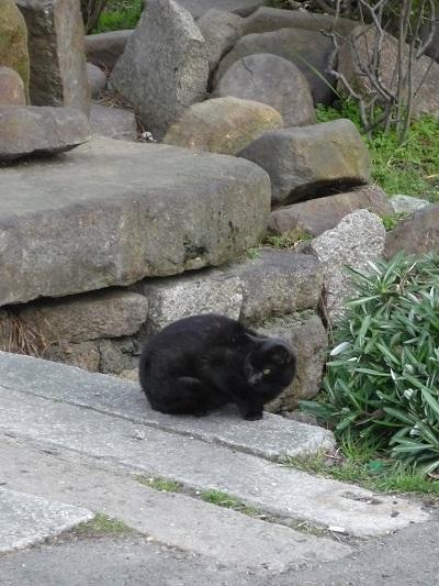 猫の館その1