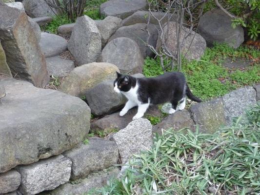 猫の館その2
