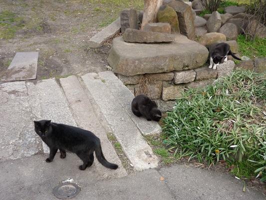 猫の館その3
