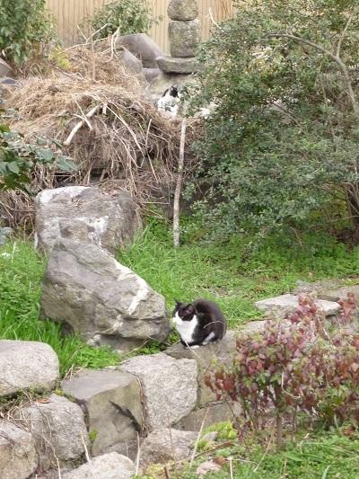 猫の館その4