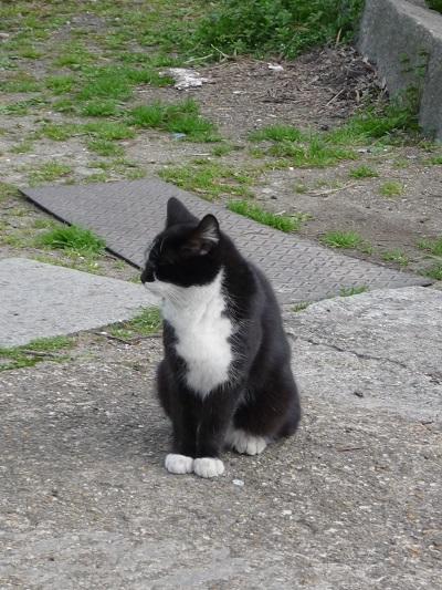 猫の庭その1