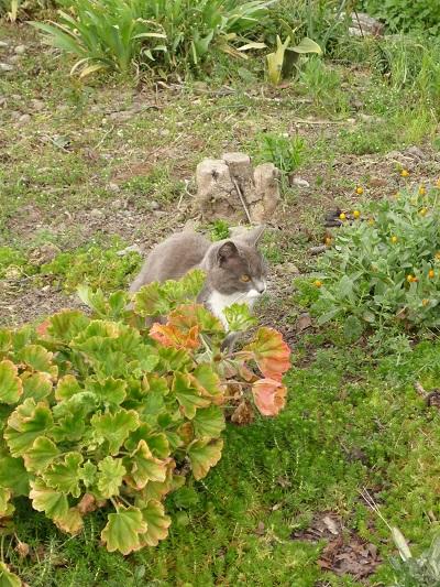 猫の庭その4