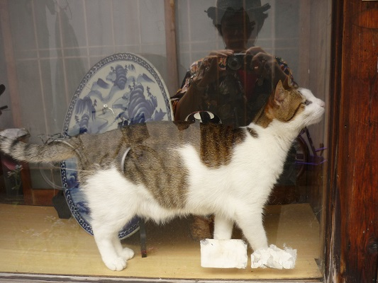 中崎町の猫その2