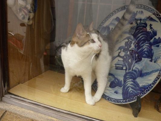 中崎町の猫その3