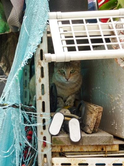 中崎町の猫