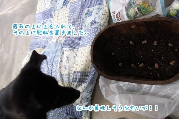 秋植え (4)