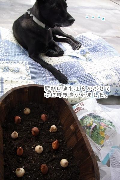 秋植え (5)