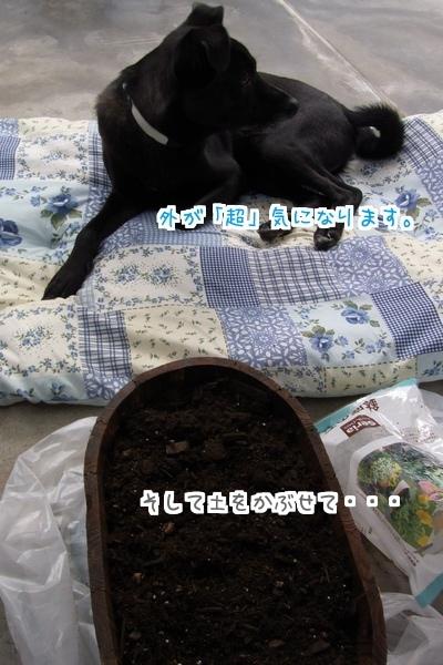 秋植え (06)