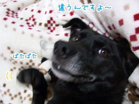 1115 添い寝 (3)