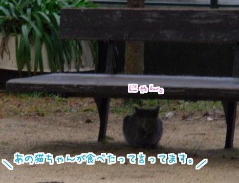 113 幻の猫 (9)
