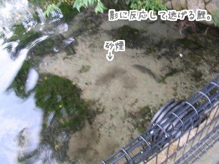 113 幻の猫 (4)
