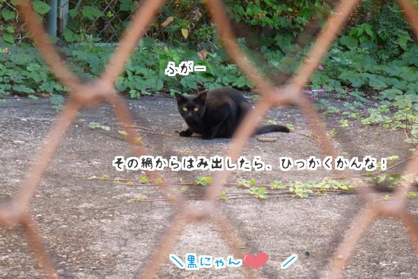 黒猫くん2