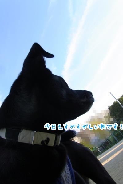黒猫くん1