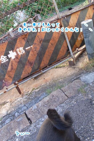 黒猫くん3