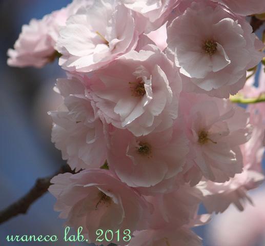 4月16日普賢象