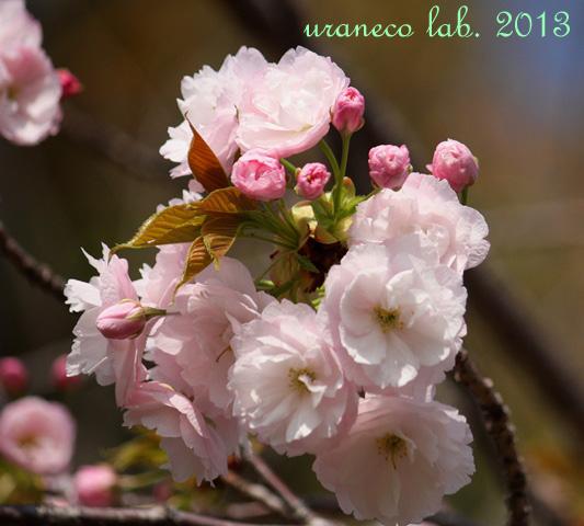 4月16日普賢象5