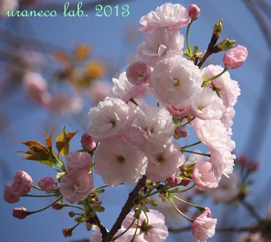 4月16日普賢象6