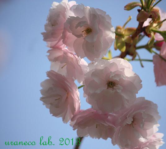 4月16日普賢象7