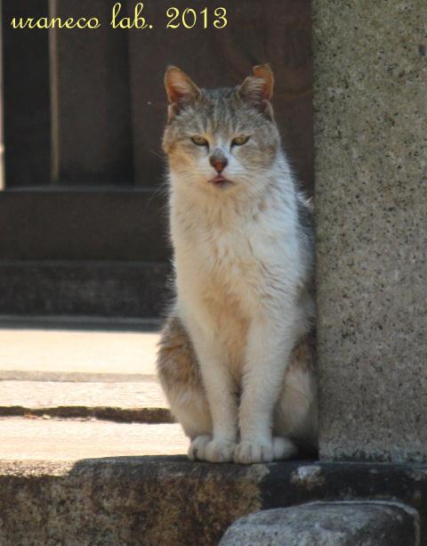 4月30日正座猫