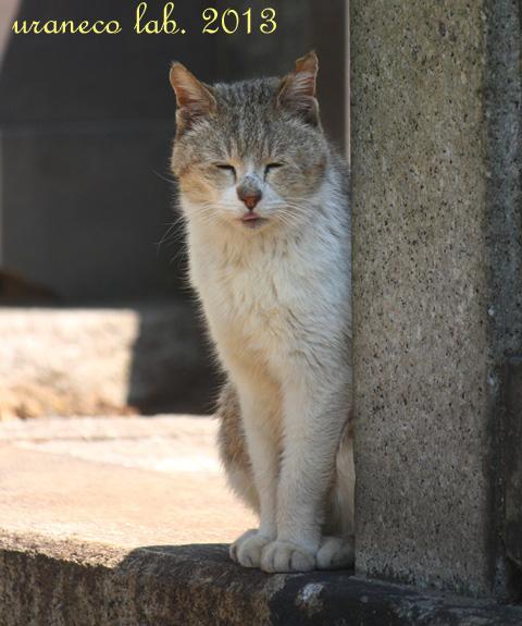 4月30日正座猫2