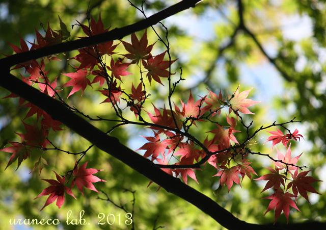 5月15日初夏の紅葉