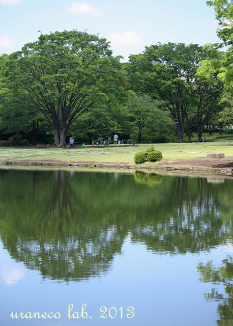 5月15日公園遠景