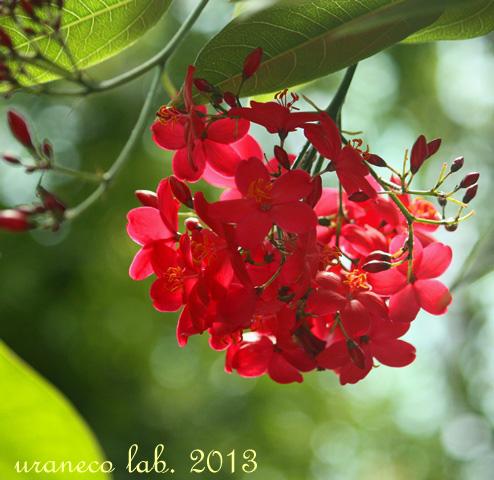 5月23日温室の花2