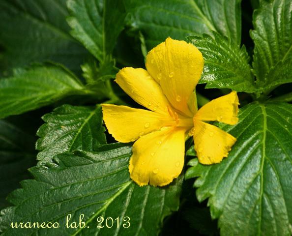 5月23日温室の花3