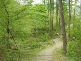 ヒプノセラピー スピリチュアルライフ 森林