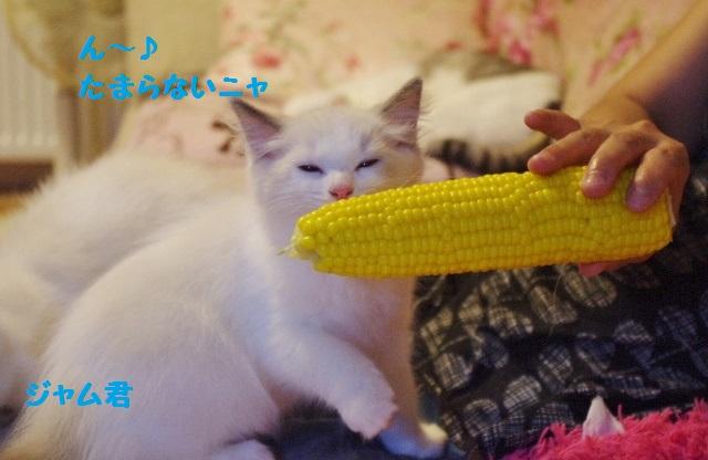 とうきびIMGP4757