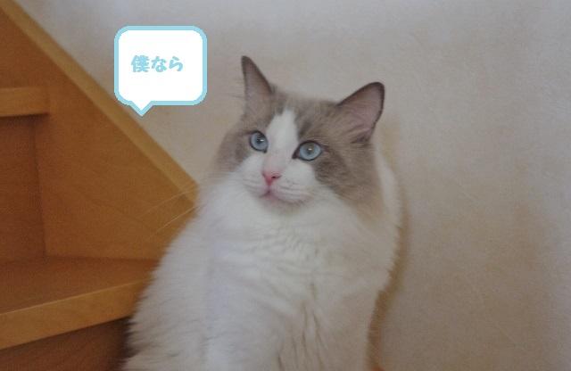 NIMGP6373.jpg