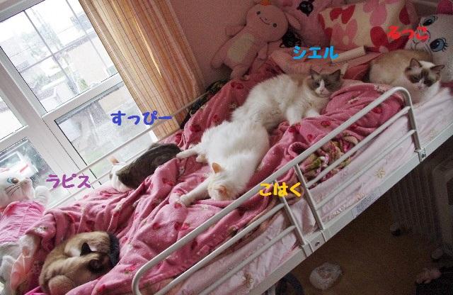 NNIMGP8546.jpg