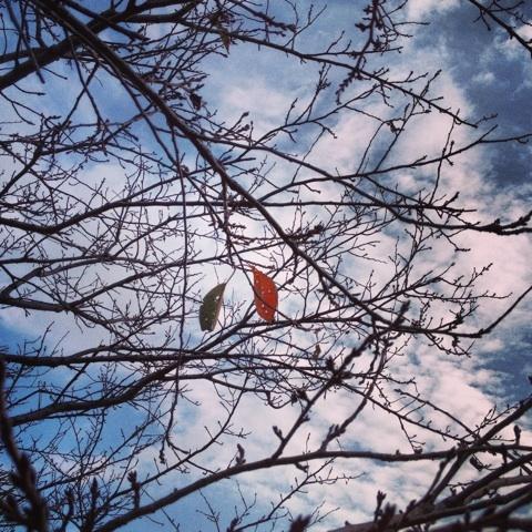 枯葉 ウエス・モンゴメリ ジャズ 画像