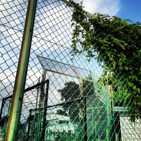 野球場 なんJ グラウンド 画像