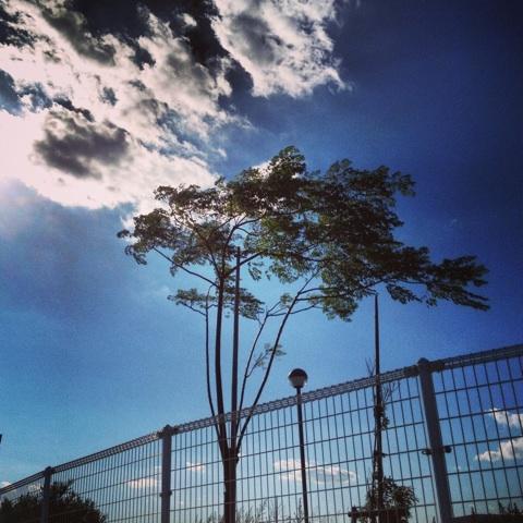 空 風 木々 画像