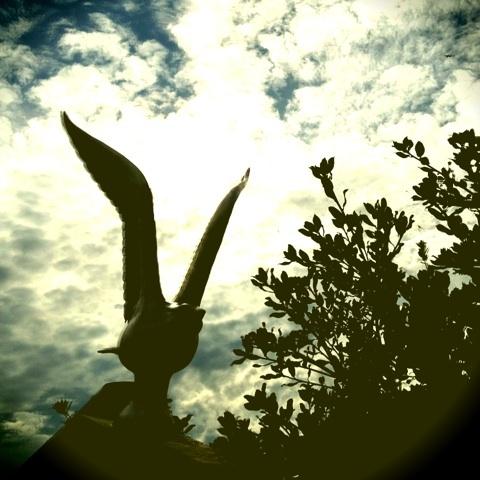 鳥 サンダーバード・ヒルズ ミッシェル・ガン・エレファント 画像