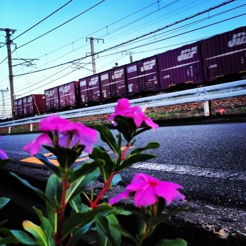 路傍 花 列車 画像