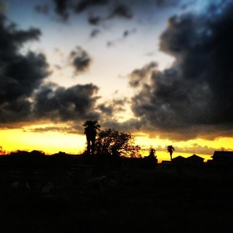 南国 ヤシ 夕暮れ 画像