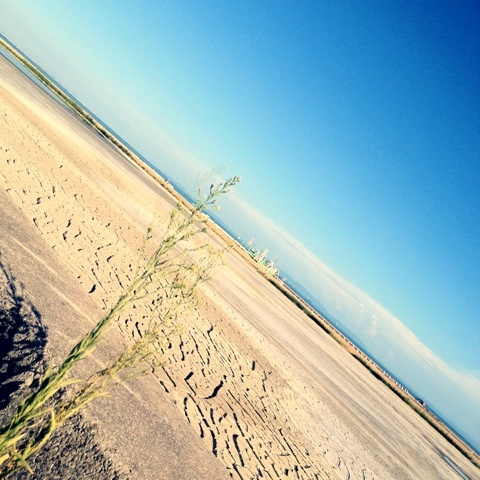 荒野 干拓地 地平線 画像